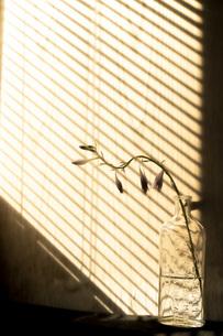 縞模様の影の写真素材 [FYI04744519]