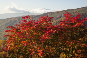 吾妻山山麓の紅葉の写真素材 [FYI04744850]
