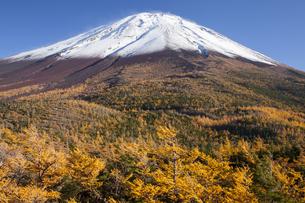 富士山奥庭のカラマツ黄葉の写真素材 [FYI04744861]