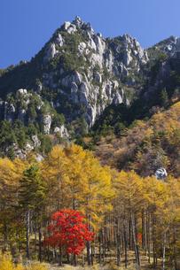 瑞牆山とカラマツ黄葉の写真素材 [FYI04744863]