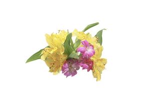 アルストロメリアとカーネーションの花束の写真素材 [FYI04745033]