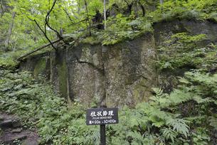 紅葉谷の柱状節理(北海道・層雲峡)の写真素材 [FYI04745076]