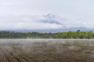 霧が流れる畑と斜里岳(北海道・斜里町)の写真素材 [FYI04745094]