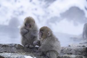 地獄谷温泉の子猿の写真素材 [FYI04745217]