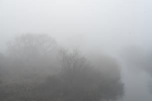 朝もやの菅生沼の写真素材 [FYI04745225]
