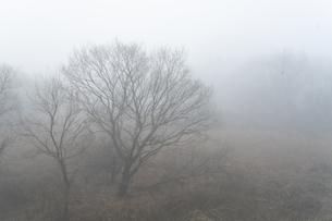 朝もやの菅生沼の写真素材 [FYI04745226]