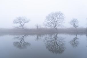 朝もやの菅生沼の写真素材 [FYI04745227]