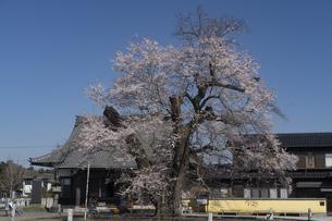 歓喜寺の写真素材 [FYI04745250]