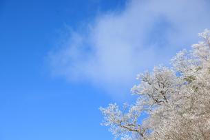 青空と樹氷の写真素材 [FYI04745261]