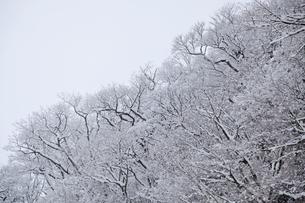 樹氷の写真素材 [FYI04745262]