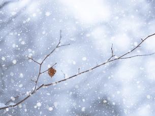 雪の日の写真素材 [FYI04745270]