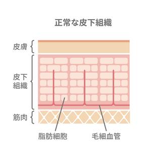 健康な皮膚の断面図イラストのイラスト素材 [FYI04745303]