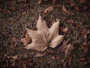 秋の落ち葉 の写真素材 [FYI04745534]