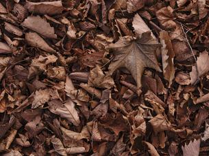 秋の落ち葉 の写真素材 [FYI04745537]