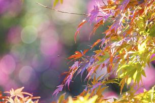 日本の秋の風景の写真素材 [FYI04745545]