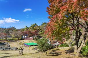 紅葉の修善寺虹の郷の写真素材 [FYI04745657]