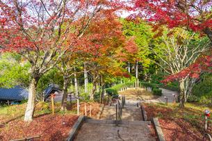 紅葉の修善寺虹の郷の写真素材 [FYI04745678]