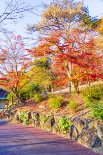 紅葉の修善寺虹の郷の写真素材 [FYI04745715]