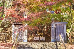 紅葉の修善寺虹の郷の写真素材 [FYI04745719]