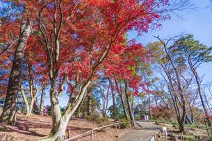 紅葉の修善寺虹の郷の写真素材 [FYI04745726]