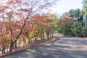 紅葉の修善寺虹の郷の写真素材 [FYI04745743]