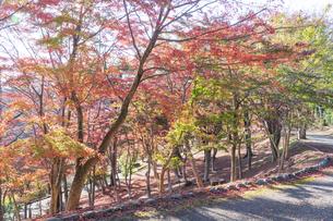 紅葉の修善寺虹の郷の写真素材 [FYI04745746]