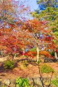 紅葉の修善寺虹の郷の写真素材 [FYI04745787]