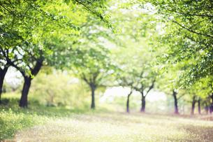 日差し差し込む草原の写真素材 [FYI04745970]