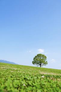 草原と一本の樹の写真素材 [FYI04745973]