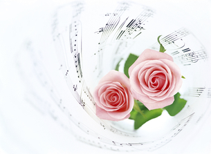 楽譜とピンクのバラの写真素材 [FYI04746087]
