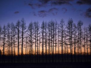 防風林と朝焼けの写真素材 [FYI04746156]