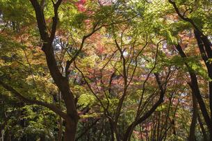 茨城県筑波山、四季の道の紅葉の写真素材 [FYI04746208]