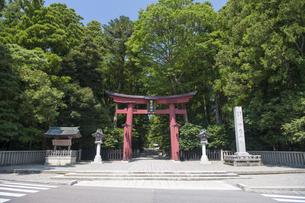 弥彦神社 一の鳥居の写真素材 [FYI04746320]