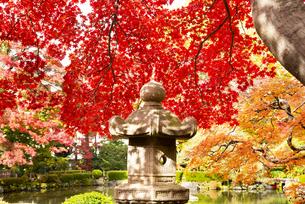 秋のもみじ公園の写真素材 [FYI04746328]
