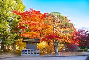 秋のもみじ公園の写真素材 [FYI04746339]
