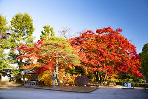 秋のもみじ公園の写真素材 [FYI04746345]