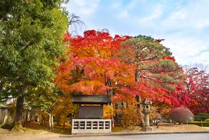 秋のもみじ公園の写真素材 [FYI04746355]