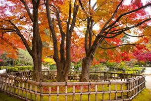 秋のもみじ公園の写真素材 [FYI04746356]