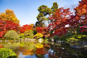 秋のもみじ公園の写真素材 [FYI04746366]