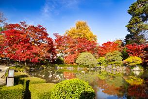 秋のもみじ公園の写真素材 [FYI04746369]