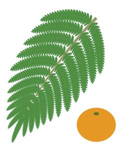 シダ植物の葉 ウラジロ みかん イラスト のイラスト素材 [FYI04746581]