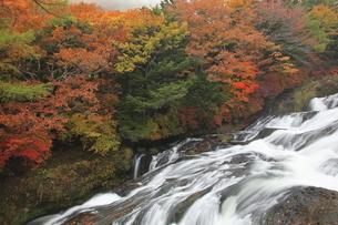 11月 紅葉の竜頭の滝-奥日光の滝-の写真素材 [FYI04746606]