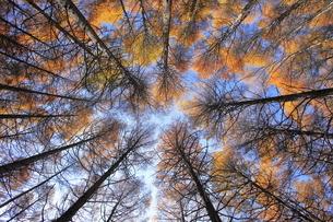 11月 紅葉の高ボッチ高原(壁紙用) -信州の高原-の写真素材 [FYI04746621]