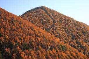 11月 紅葉の美ヶ原高原の写真素材 [FYI04746636]