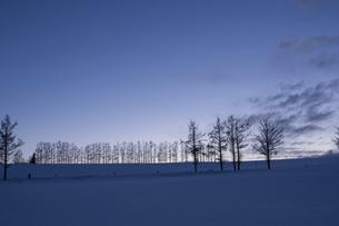 冬の夕暮れの丘とカラマツ並木の写真素材 [FYI04746731]