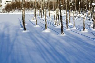 雪に覆われた冬の青い池の写真素材 [FYI04746736]