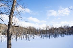 雪に覆われた冬の青い池の写真素材 [FYI04746737]