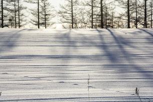 雪原の影と野生動物の足跡の写真素材 [FYI04746749]