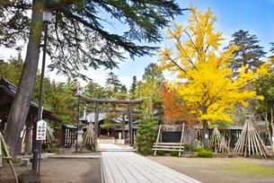 秋の上杉神社の写真素材 [FYI04746896]