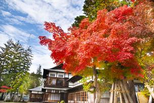 秋の上杉記念館の写真素材 [FYI04746907]